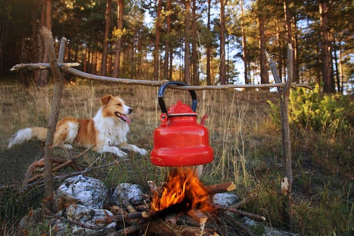 Dog Friendly Camping Grounds Western Australia