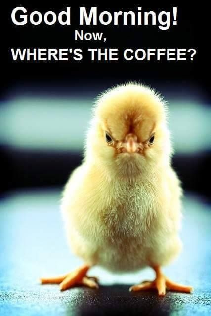 Naughty Good Morning Meme : Funny coffee memes that will have you laughing home