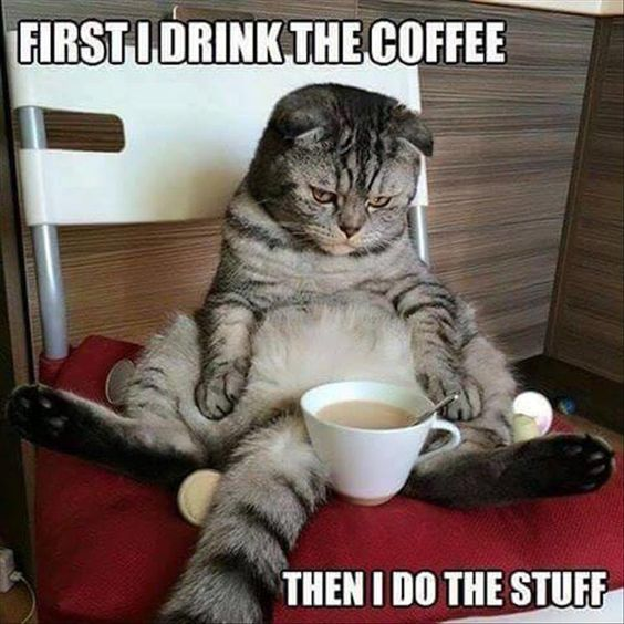 Decaffeinated Kitty 45 funny coffee memes that will have you laughing home grounds