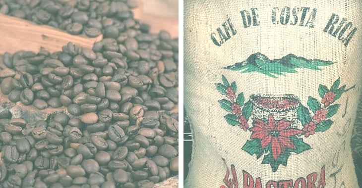 Best Costa Rican Coffee [Buying, Brewing and Roasting Advice]