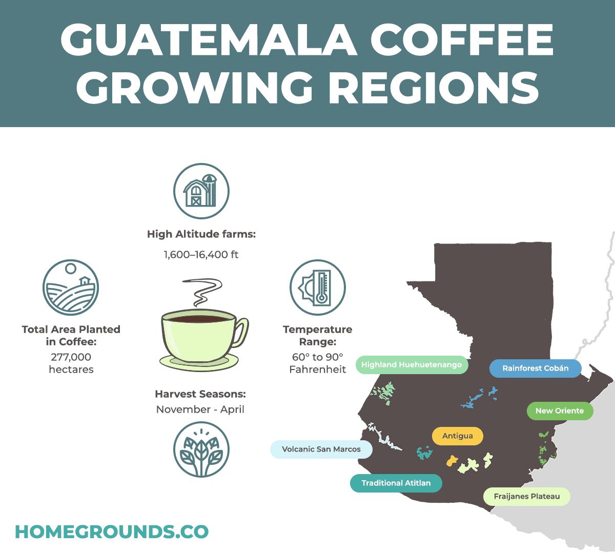 Anacafe Guatemalan Coffee Regions