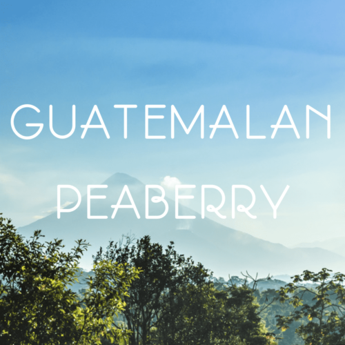 peaberry from guatemala
