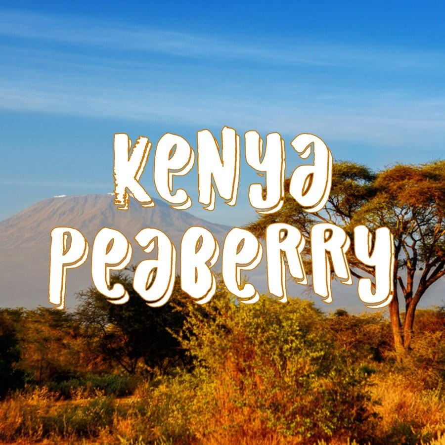 peaberry from kenya