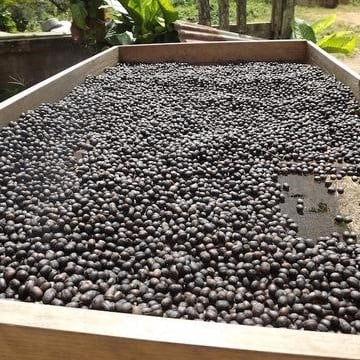 Coffee beans in a wood box