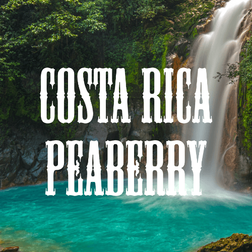 Costa Rica Peaberry banner