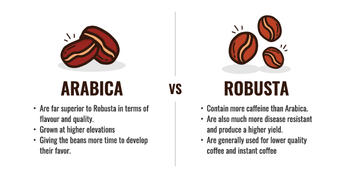 Graphic: Arabica vs. Robusta beans