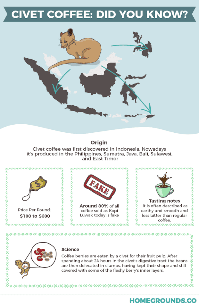 An infographic showing kopi luwak and where it comes from