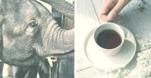an elephant and a cup of coffee on a wooden table