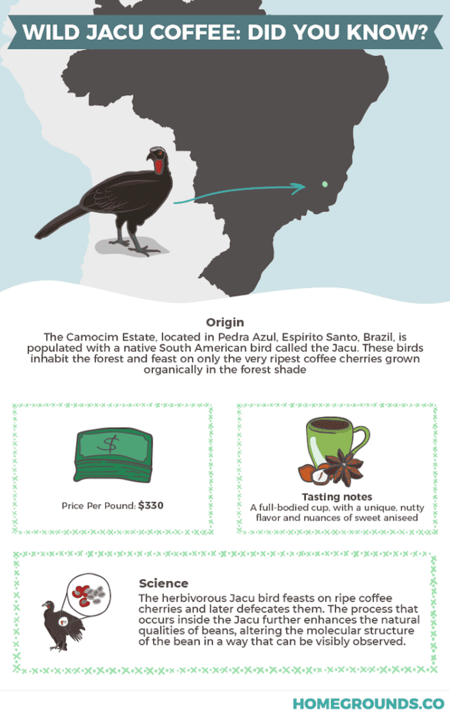 infographic showing where bird coffee comes from