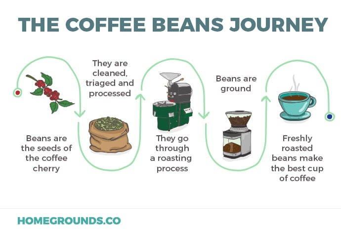 Journey from coffee bean to cup