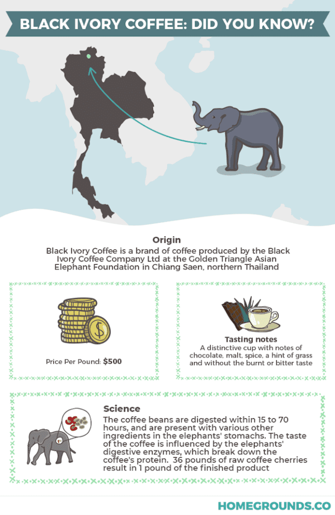 infographic showing where elephant coffee comes from