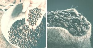 freshly picked coffee beans to make the finest coffee