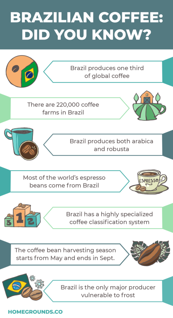 brazilian coffee facts