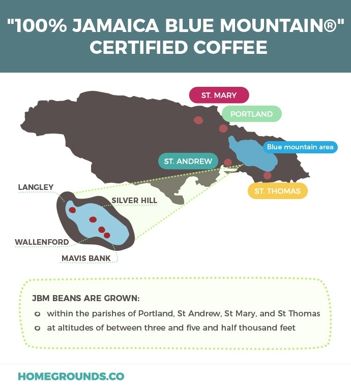 Where the best blue mountain coffee comes from in Jamaica - a map