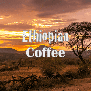 ethiopian coffee in the mountains
