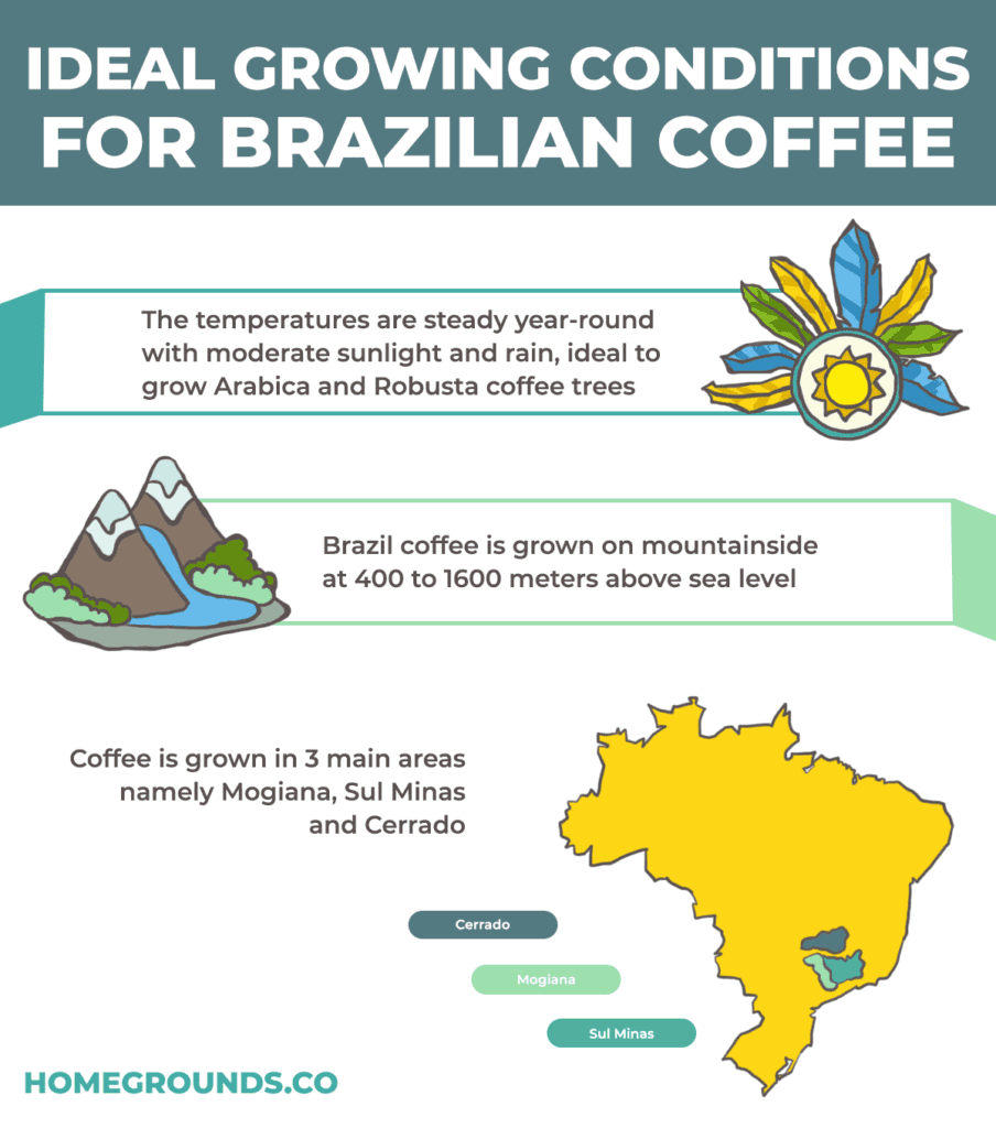 ideal growing conditions for Brazilian coffee beans in são paulo, sui de minas