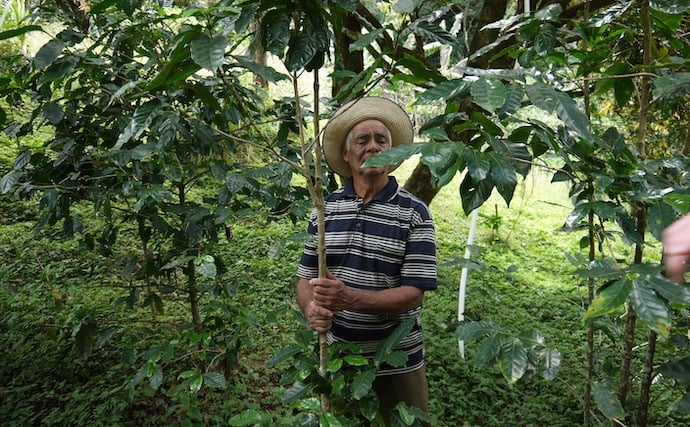 Single origin coffee from a farm from colombia