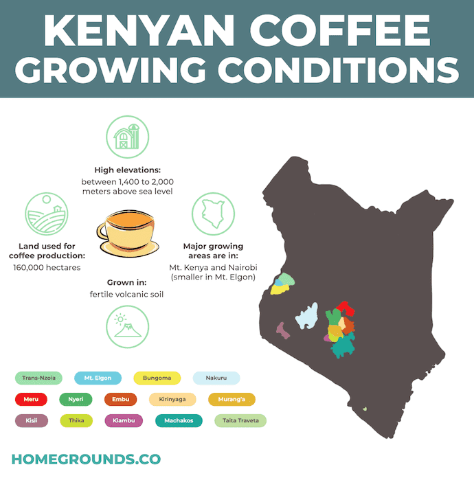 kenya coffee growing regions and conditions