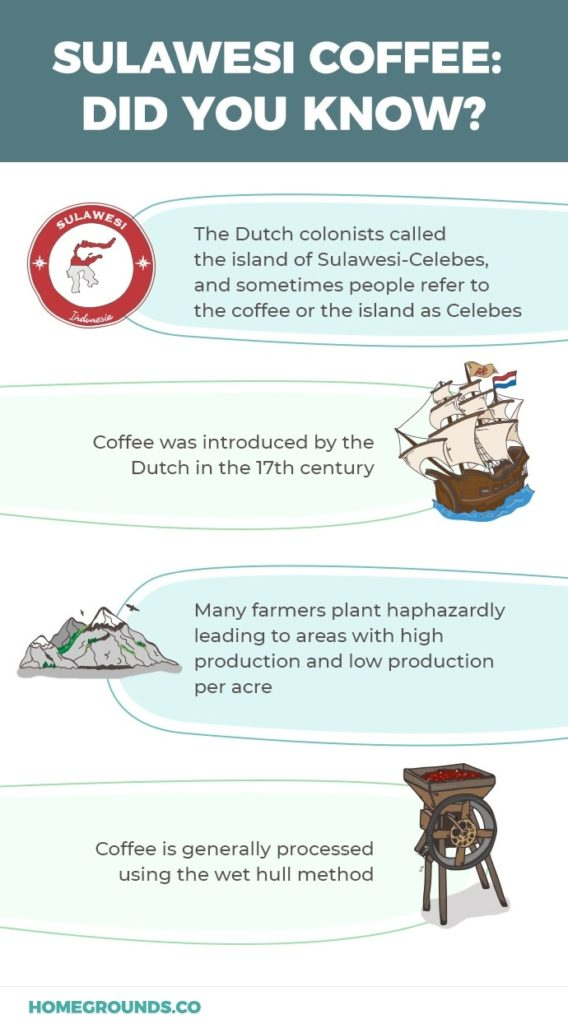 Sulawesi coffee infographic