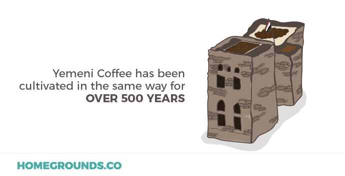 Coffee cherries from Yemen have have been cultivated the same way for more than 500 years