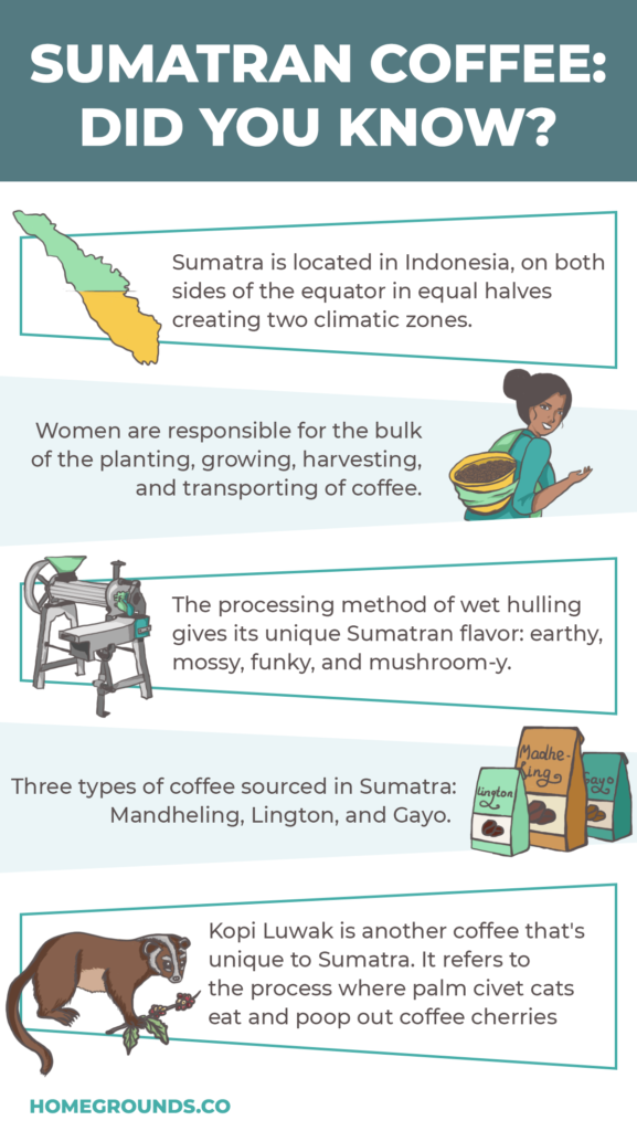 Sumatra Coffee Facts