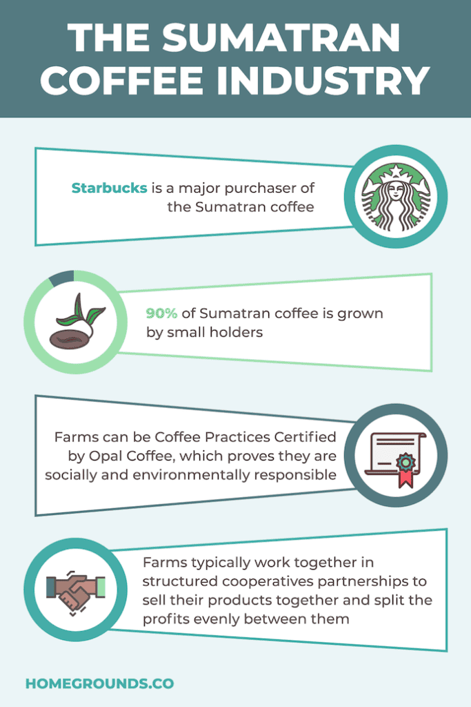 Sumatran Coffee Industry
