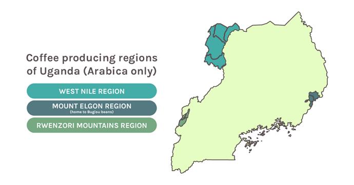 Map Of Uganda's Coffee Producing Regions