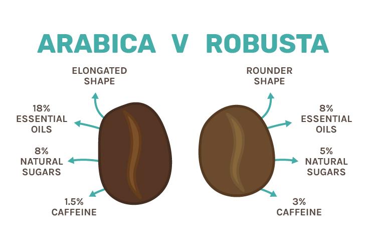 Coffee Arabica beans v Robusta beans