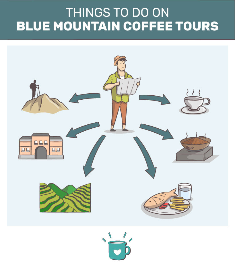 Things to do on Blue Mountain coffee tours.