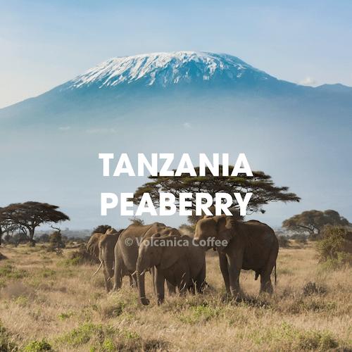 Volcanica Tanzania Peaberry