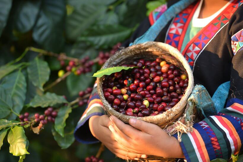 woman carrying fresh coffee beans
