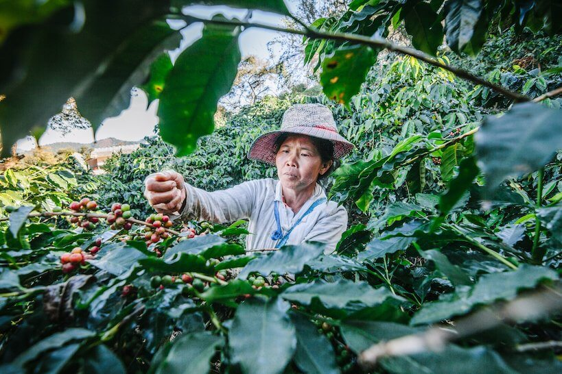 woman on the coffee farm